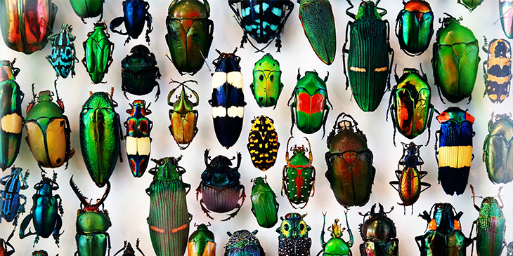 Differently sized, shped and coloured beetles