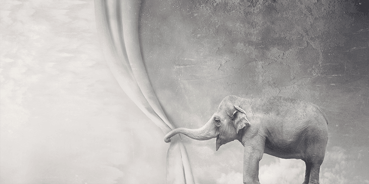 Indian elephant pulling aside a grey curtain
