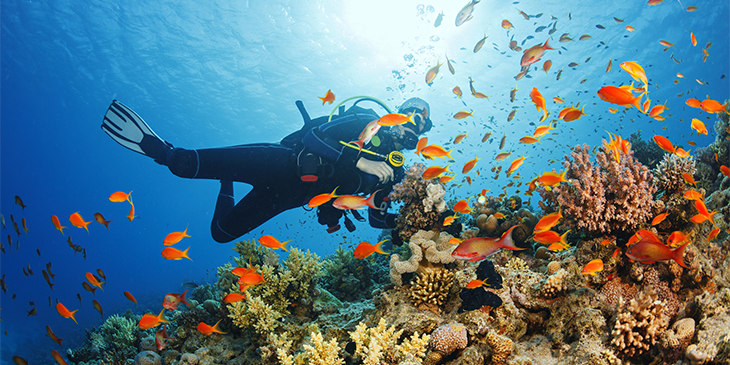 scuba diver with colourful fish on a coral reef